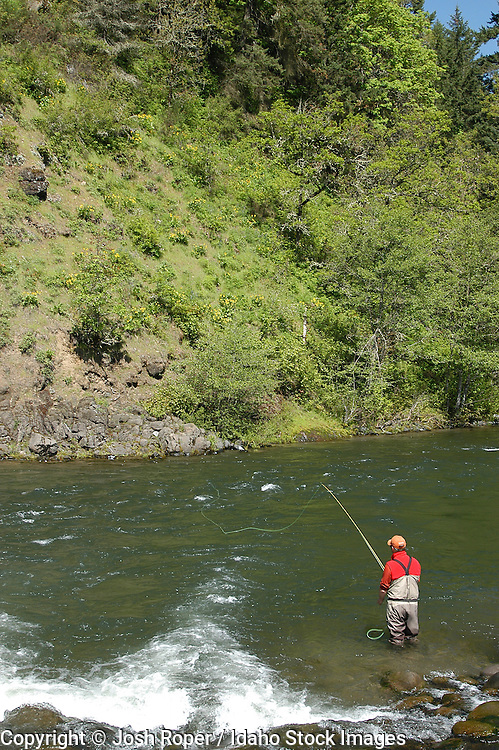 Fly fisherman casting into the river surrounded by beautiful green trees. Washington