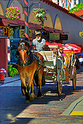 Horse and Carriage on Aviles Street in St. Augustine, Florida