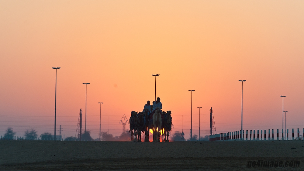 November 2010, Dubai, another view of Dubai despite the shopping centers there is still some traditions who are lived like the camel racing about 30 km outside of Dubai