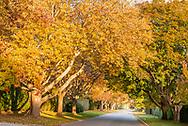 Fall, Ox Pasture Rd., Southampton, NY