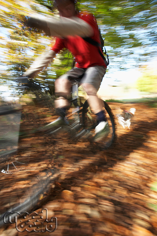 Dog chasing person on mountain bike through woodland motion blur