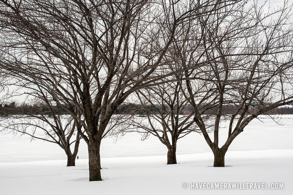 WASHINGTON DC--The area around the Tidal Basin and West Potomac Park in the aftermath of Washington DC's blizzard of January 2016, dubbed by the locals as Snowzilla.