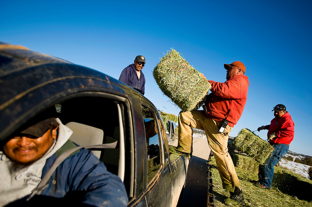 022310        Brian Leddy.Kevin Chatto, a supervisor for the Ramah Navajo Chapter House, loads hay onto a  truck with fellow workers Carlos Beaver and Larry Pino on Tuesday near Pine Hill. The most recent bout of winter weather has made road conditions challenging for many, so the chapter is helping deliver hay to residents that need assistance.