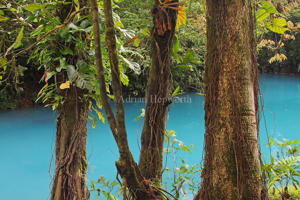 The Rio Celeste (Blue River) on the slopes of Tenorio Volcano is a magical place to photograph. The combination of bright blue water and the greens and yellows of the rainforest vegetation is simply enchanting. The color of the water is a result of sulfurous gas from the volcano seeping up through the river bed and mixing with calcium carbonate in the water.<br />