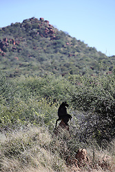 NAMIBIA GROOTFONTEIN 2MAY14 - Baboons by the roadside at the Waterberg Plateau National Park near Grootfontein, Namibia.<br /> <br /> <br /> <br /> jre/Photo by Jiri Rezac<br /> <br /> <br /> <br /> © Jiri Rezac 2014
