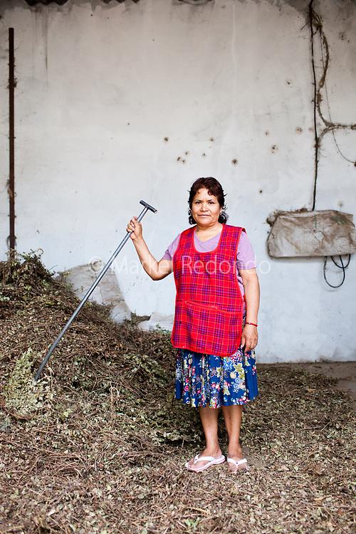 Edith Sacramento Castillo, 59 ans, cultive les cacahou&egrave;tes &agrave; Tezeotepan De Bonilla, Puebla, Mexico. Son fils vit aux Etats-Unis depuis 10 ans. Avec l'argent que lui envoie son fils et le revenu de son &eacute;picerie, Edith peut vivre dignement.<br /> <br /> Edith Sacramento Castillo, 59, cultiva cacahuates  en Tezeotepan De Bonilla, Puebla, Mexico. Edith tiene un hijo en USA desde hace 10 a&ntilde;os. Su hijo le env&iacute;a algo de dinero y con eso y con la tienda se mantiene.
