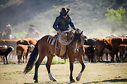 Cowboy Working  on Colt, 06 Ranch, West Texas