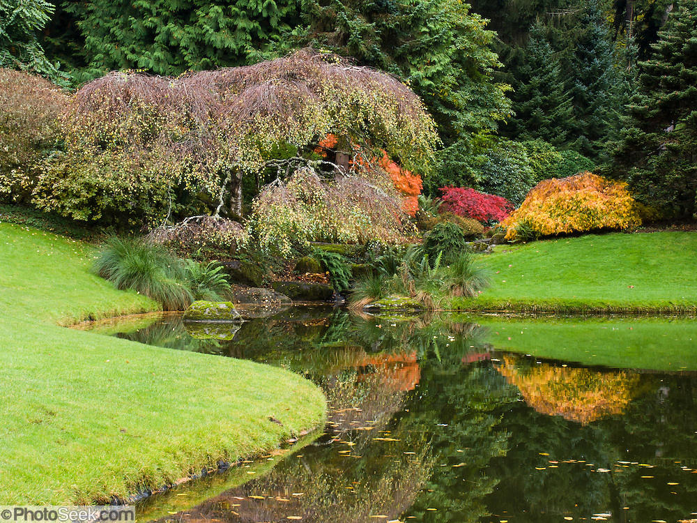 The Bloedel Reserve was near its peak of fall colors on October 19, 2005. The Bloedel Reserve is a 150-acre forest garden on Bainbridge Island, Washington, built by the vice-chairman of a lumber company, under the influence of the conservation movement and oriental philosophy. The Bloedel Reserve has both natural and highly-landscaped lakes, immaculate lawns, woods, a traditional Japanese garden, a rock and sand Zen garden, a moss garden, a rhododendron glade, and a Reflection Garden. The Bloedel's French Chateau-style home is preserved as a Visitor Center, including many original furnishings. Reservations are required; visit www.bloedelreserve.org for more information.