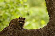 20080515 Wildlife