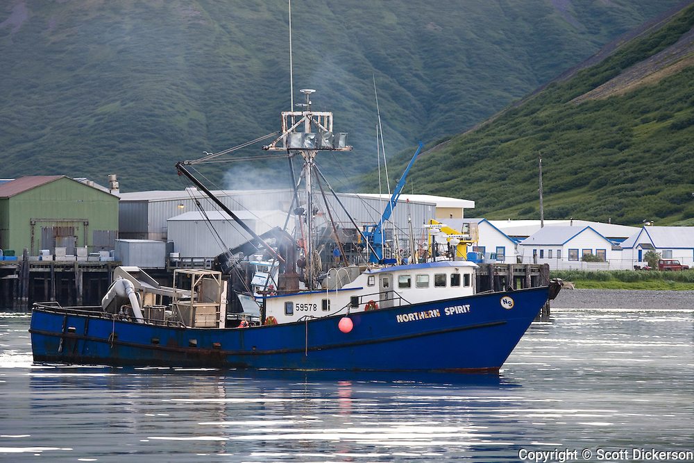 The commercial salmon fishing tender vessel, Northern Spirit, leaving the cannery in King Cove, Alaska Peninsula, Alaska.
