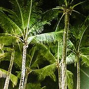 THA/Koh Samui/20160804 - Vakantie Thailand 2016 Koh Samui, Palmbomen in het donker