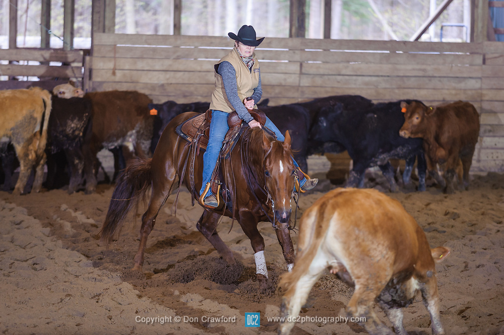 April 30 2017 - Minshall Farm Cutting 2, held at Minshall Farms, Hillsburgh Ontario. The event was put on by the Ontario Cutting Horse Association. Riding in the 250 Novice Rider Class is Lynne Purdie on Timothy Taz owned by the rider.