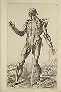 "Male full body front woodcut print at the opening of the Human Anatomy book ""Notomie di Titiano"" Printed in Italy in 1670"