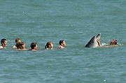 "Friendly, solitary bottlenose dolphin ""Dave"" playing with swimmers. Hythe, Kent, UK"