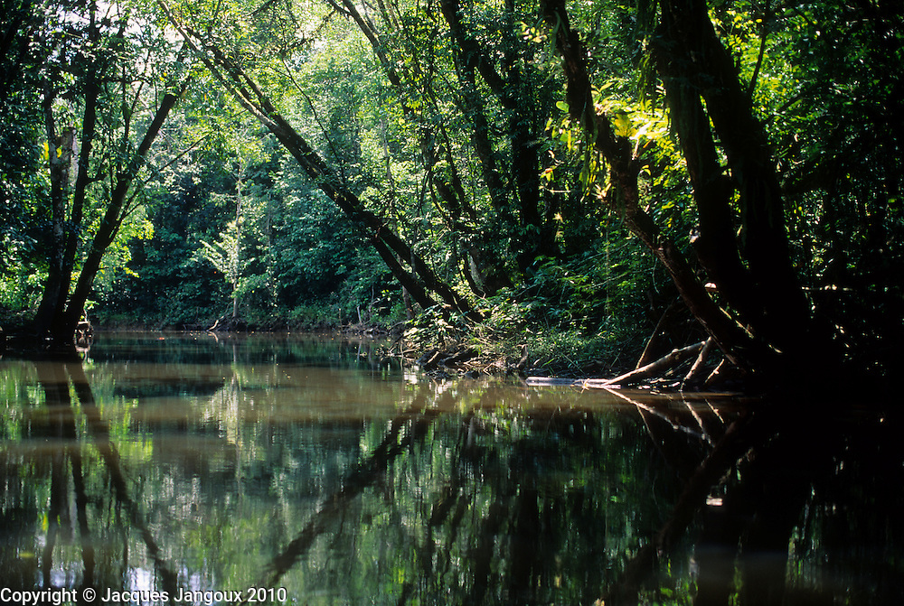 Small river in rainforest, Amazon region, Para State, Brazil