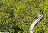 Baumwipfelpfad im Nationalpark Hainrich, Thueringen, BRD