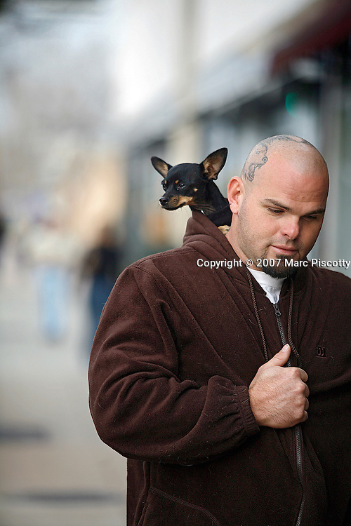 SHOT 11/11/2007 - A Fort Collins, Co. resident walks down a street in Old Town Fort Collins with his pet chihuahua in the back hood of his jacket. The City of Fort Collins, a home rule municipality situated on the Cache la Poudre River along the Colorado Front Range, is the county seat and most populous city in Larimer County, Colorado. With roughly 130,000 residents, making it the fifth most populous city in Colorado, Fort Collins is a large college town, home to Colorado State University. It was named Money magazine's Best Place to Live 2006. Includes images of Old Town, a restored historic district, which offers a look at the earliest roots of the city, and has plenty of good shopping opportunities..(Photo by Marc Piscotty/ © 2007)