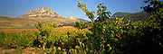 SPAIN, AGRICULTURE, LA RIOJA vineyards below the village of Cellorigo