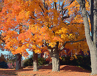 Fall foliage, Fitzwilliam, New Hampshire.