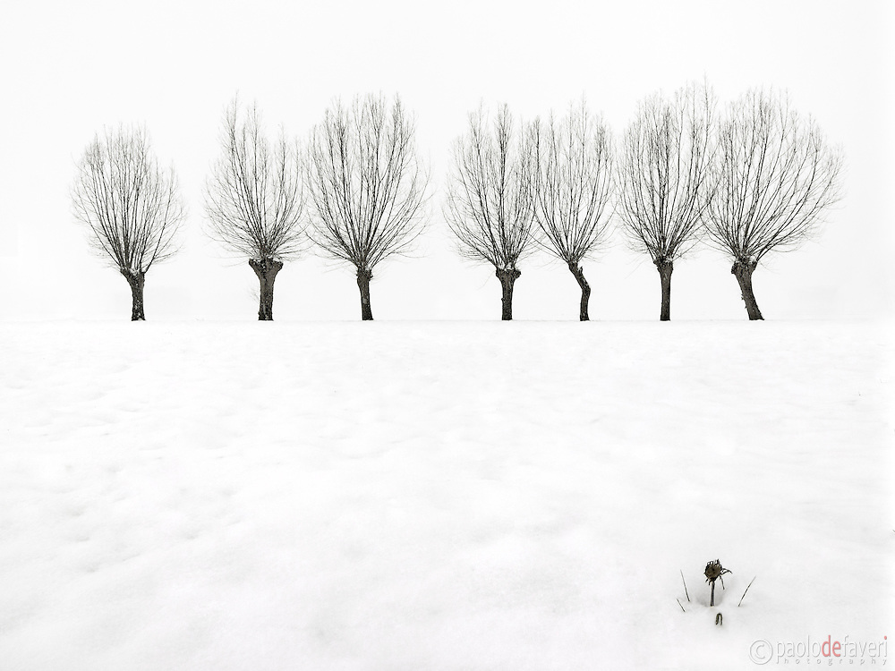 Snow in the ground and hazy atmosphere are just the best conditions for highly graphical and minimalist photos such as this one. I took this picture in the fields around my home town of Scalenghe in Piedmont, Italy, on a cold morning at the middle of Decemeber, a few minutes after sunrise and under a heavy snowfall.