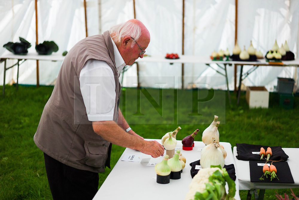 &copy; Licensed to London News Pictures.12/08/15<br /> Danby, UK. <br /> <br /> A man arranges his entry of onions ahead of judging at the 155th Danby Agricultural Show in the Esk Valley in North Yorkshire. <br /> <br /> The popular agricultural show attracts competitors and visitors from all over the surrounding area to this annual showcase of country life. <br /> <br /> Photo credit : Ian Forsyth/LNP