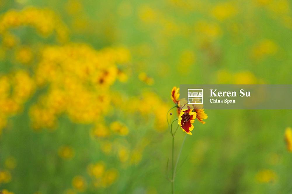 Flowers on the meadow, Zigui, Hubei, China
