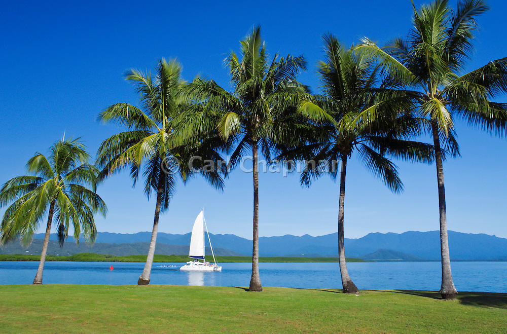 Sailing boat heading to the Great Barrier Reef past palm trees, blue sky and the mountains in Port Douglas, Queensland, Australia. <br />