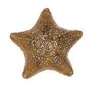 cushion star