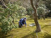 Japan, Honshu, Kyoto, Kiyomizu-Dera temple, Gardener sweeps the lawn