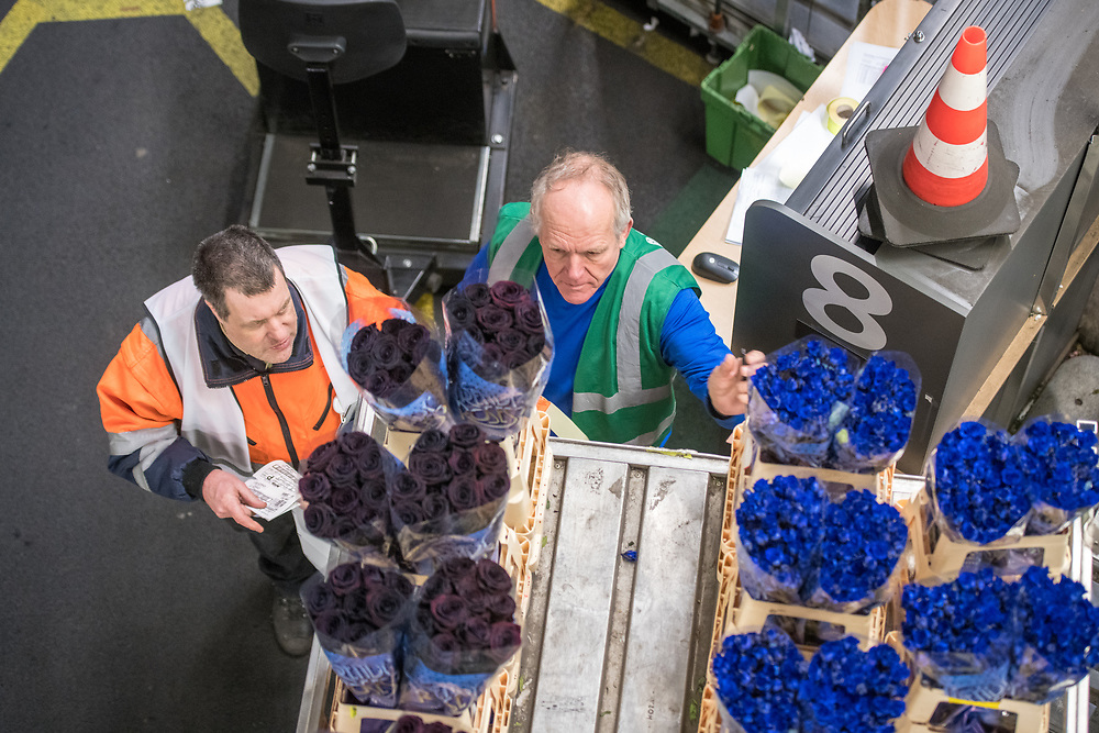 Workers in the warehouse at the worlds largest flower auction, Royal Flora Holland examine flowers. Amsterdam, Netherlands