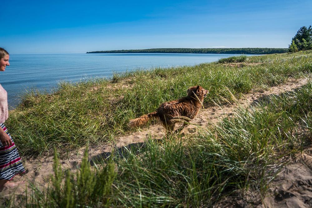 Lake Superior summer beach day with golden retriever dog--soft focus.