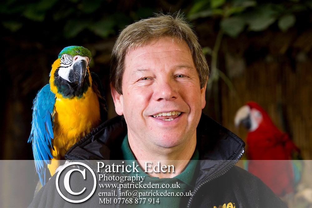 Parrots, Birds, Derek Curtis, Owner, Amazon World, Arreton, Isle of Wight, England, UK,