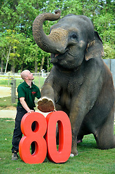 © under license to London News Pictures.  23.05.11.Senior Elephant Keeper Stefan Groeneveld celebrates Whipsnade Zoo's 80th Birthday with 29 year old Asian elephant Kaylee.