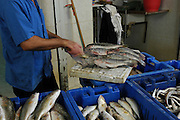 cleaning fish at a fish market