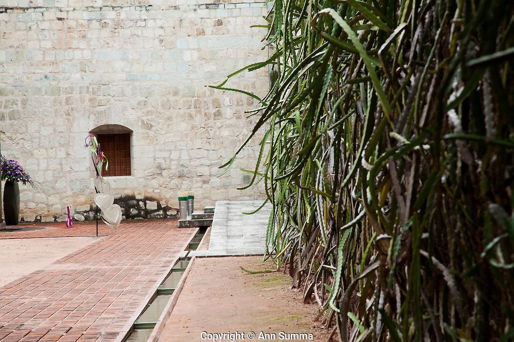 Oaxaca, Mexico: A wall of dragon fruit plant designed by Francisco Toledo in a courtyard at The Jardin Ethno-Botanico in Oaxaca, Oaxaca. (Photo: Ann Summa).