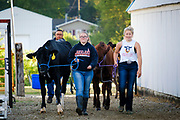 16 JULY 2020 - BOONE, IOWA: 4H contestants bring their dairy cows to the cow wash on the first day of the Boone County Fair in Boone. Summer is county fair season in Iowa. Most of Iowa's 99 counties host their county fairs before the Iowa State Fair. In 2020, because of the COVID-19 (Coronavirus) pandemic, many county fairs were cancelled, and most of the other county fairs were scaled back to concentrate on 4H livestock judging. Boone county scaled back its fair this year. The Iowa State Fair was cancelled completely. Boone County Emergency Management did not approve going ahead with the fair, and has advised anyone who goes to the fair to take precautions and monitor themselves for symptoms of the Coronavirus.            PHOTO BY JACK KURTZ