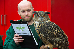 © Licensed to London News Pictures. 03/01/2013 London, UK. Keeper Jamie Pearce with a European Eagle Owl at the annual stocktake of every animal at London Zoo, Regents Park, London. The compulsory count is required as part of the zoo's licence and every creature, great or small will be accounted for..Photo credit : Simon Jacobs/LNP