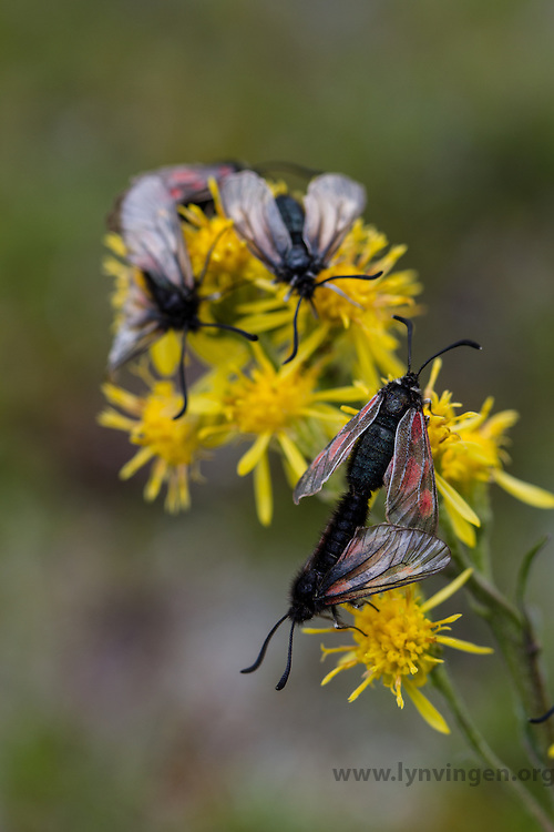 Insects on flower