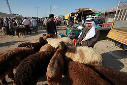 Aug. 28, 2017  - Nablus, West Bank, Occupied Territories - A Palestinian livestock trader waits for customers ahead of the Muslim festival Eid al-Adha in the West Bank city of Nablus. Muslims across the world are preparing to celebrate the annual festival of Eid al-Adha, or the Festival of Sacrifice.  (Credit Image: © Nidal Eshtayeh/Xinhua via ZUMA Wire)
