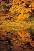 Man Horseback Riding by Fall Lake