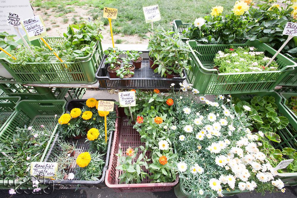Variety of flower plants for sale