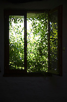 Shrubbery behind window