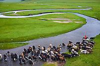 Mongolie, Arkhangai, cavalier mongol avec son troupeau de yaks  // Mongolia, Arkhangai province,  Mongolian horserider with a herd of yaks
