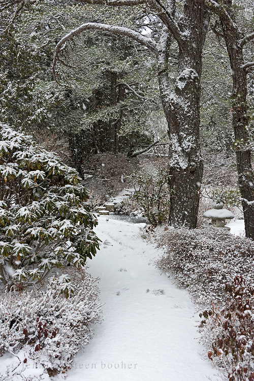 Snow covers a pathway at the Asticou Azalea Garden during a winter storm.