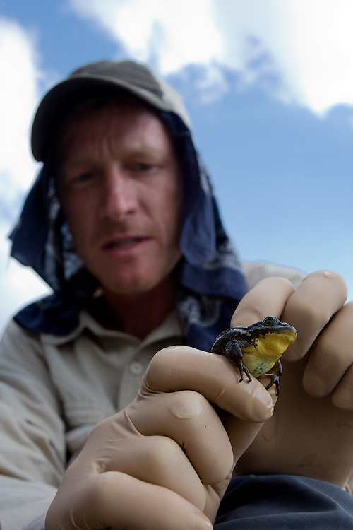 Vance Vredenburg holding the Critically Endangered mountain yellow-legged frog, Rana muscosa