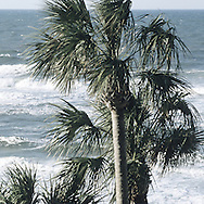 Fl Palm Trees And Ocean