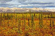 Sub arctic vegetation<br /> Dempster Highway<br /> Yukon<br /> Canada