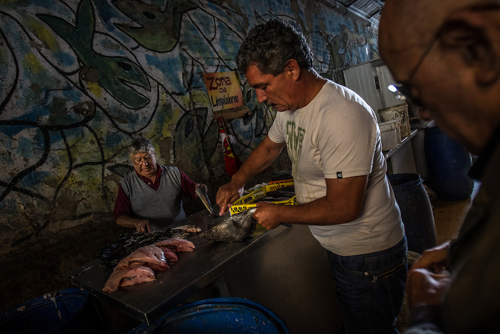 VALPARAISO, CHILE - MARCH 17, 2014: Carlos Gonzalez (center) and Luis Morgado (left) clean fish to sell at the Valparaiso fish market. PHOTO: Meridith Kohut for The World Wildlife Fund