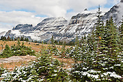 "Snow dusts evergreen trees above Logan Pass, in Glacier National Park, Montana. Since 1932, Canada and USA have shared Waterton-Glacier International Peace Park, which UNESCO declared a World Heritage Site (1995) containing two Biosphere Reserves (1976). Rocks in the park are primarily sedimentary layers deposited in shallow seas over 1.6 billion to 800 million years ago. During the tectonic formation of the Rocky Mountains 170 million years ago, the Lewis Overthrust displaced these old rocks over newer Cretaceous age rocks. Glaciers carved spectacular U-shaped valleys and pyramidal peaks as recently as the Last Glacial Maximum (the last ""Ice Age"" 25,000 to 13,000 years ago). Of the 150 glaciers existing in the mid 1800s, only 25 active glaciers remain in the park as of 2010, and all may disappear by 2020, say climate scientists."