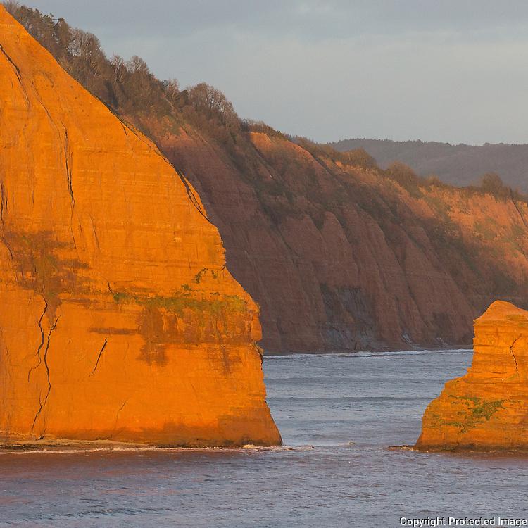 Ladram Rocks, (Triassic sandstone sea stacks) Ladram Bay, Devon.